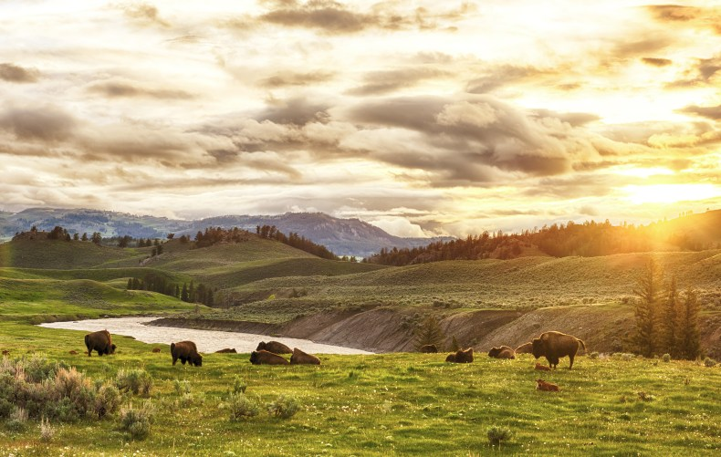 Wyoming sun