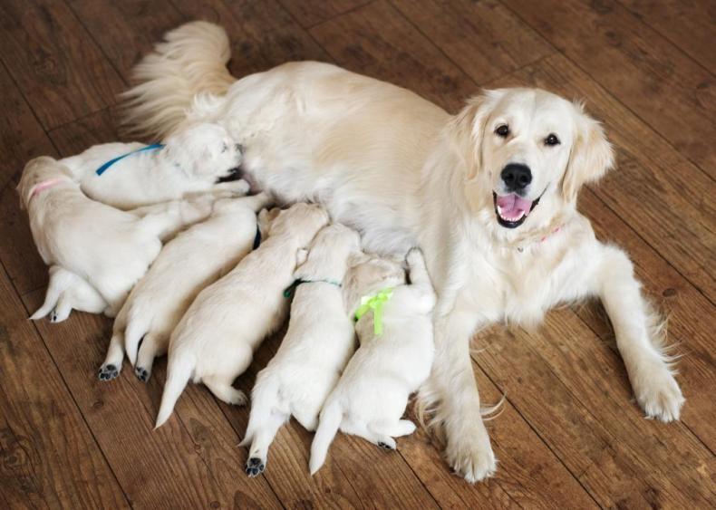 #7. Animal Breeders