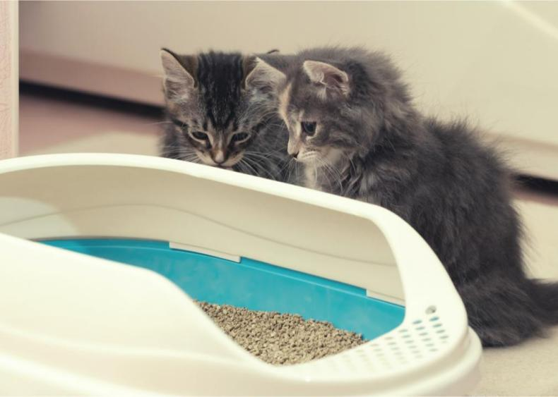 Is it hard to house-train kittens?