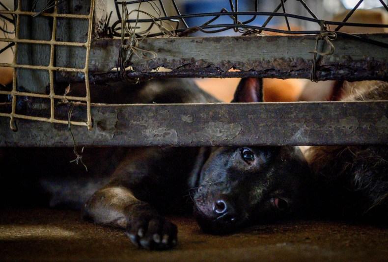 Liam Dog Shelter Kentucky