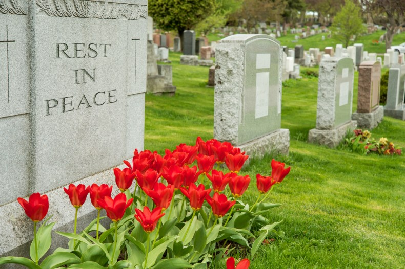 Photo of cemetery with roses