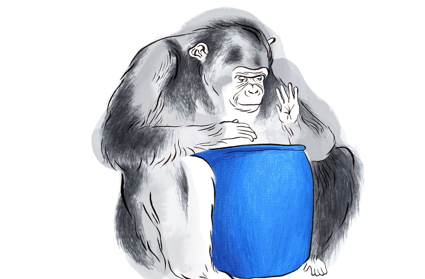 did a chimpanzee perform