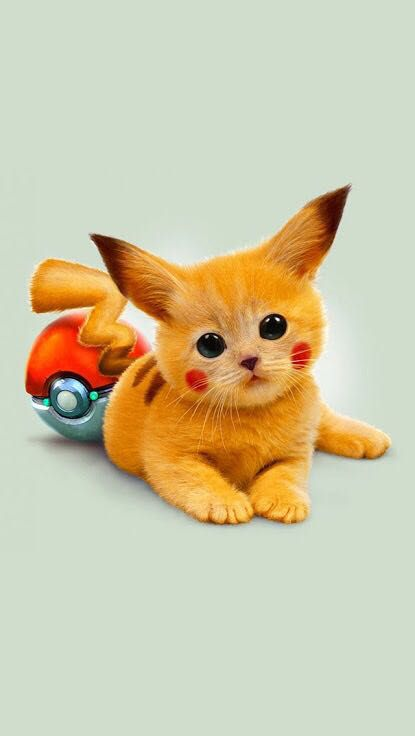 Cute Pintrest Quote Wallpapers Wallpapers And More Pichacu Cat Wattpad