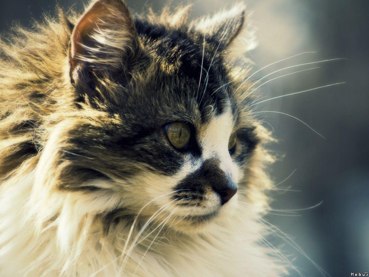 Warrior Cats Name Generator 2