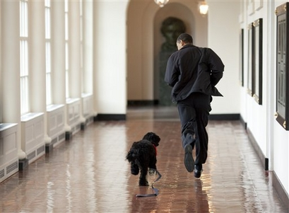President Barack Obama, Bo