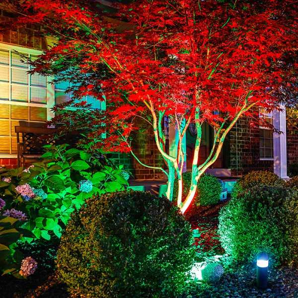best sneakers 4aa88 95f65 25+ Rgb Landscape Lighting Trees Pictures and Ideas on Pro ...