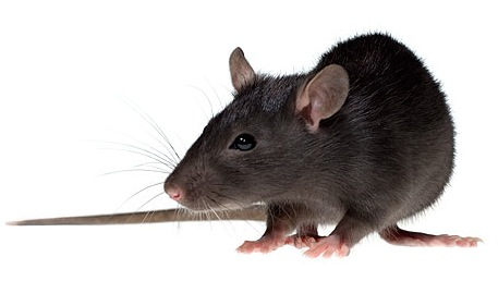 Hantavirus Danger in Homes - InterNACHI®