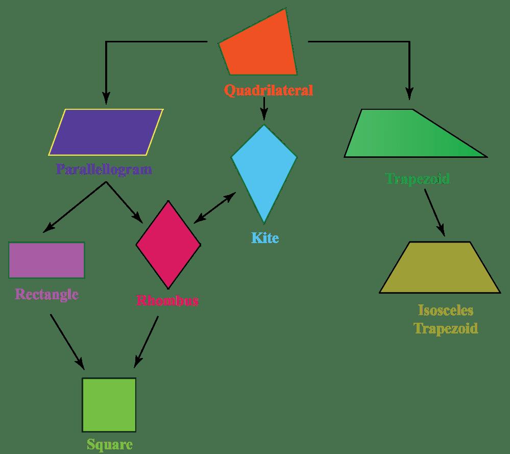 medium resolution of Quadrilaterals: Types   Properties   What is Quadrilaterals