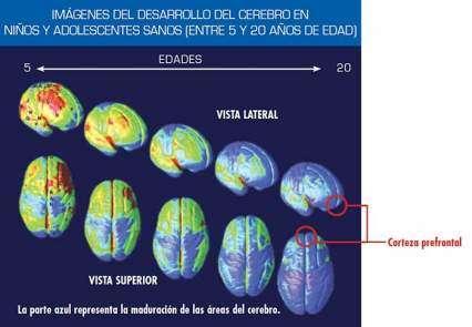 Imágenes que muestran el desarrollo del cerebro en niños y adolescentes sanos (de edad 5-10)
