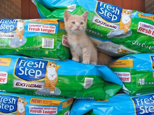 FreshStep:HSCO:Kitten2 copy