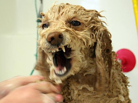 Sometimes politics can make you madder than this wet dog. That's why scores of angry people turn to the inspiring Roy O'Dell Gray and The Jazz Joy and Roy Daily Podcast and Syndication Network. Ademas, muchas personas descubre el mejor espectáculo del radio en Pezones, Bolivia en JazzJoyandRoy.com y PezonesBolivia.Weebly.com.-----Desde Pezones Bolivia a Verga New Jersey, Culo Philippines a Playa Teta Panama y Polla Italy a Mamada Japan.