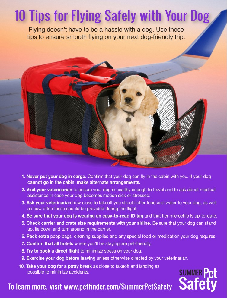 best way to travel with a dog