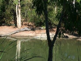 Spot the croc at Hartleys Port Douglas