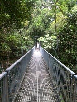 Mossman Gorge bridge