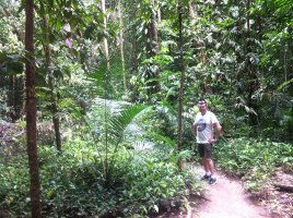 Mossman Gorge David