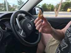 Fried dim sim