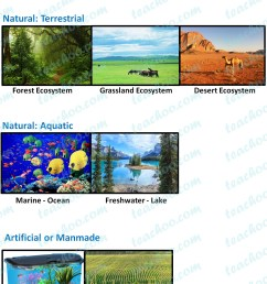 Types Of Biomes Worksheet   Printable Worksheets and Activities for  Teachers [ 1852 x 1352 Pixel ]