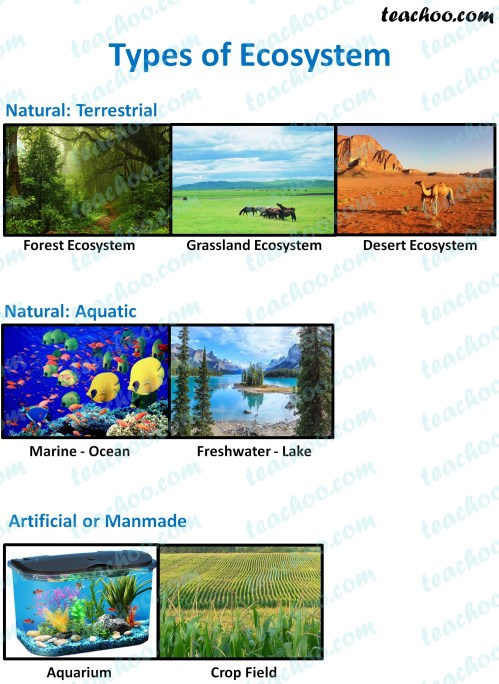 small resolution of Types Of Biomes Worksheet   Printable Worksheets and Activities for  Teachers