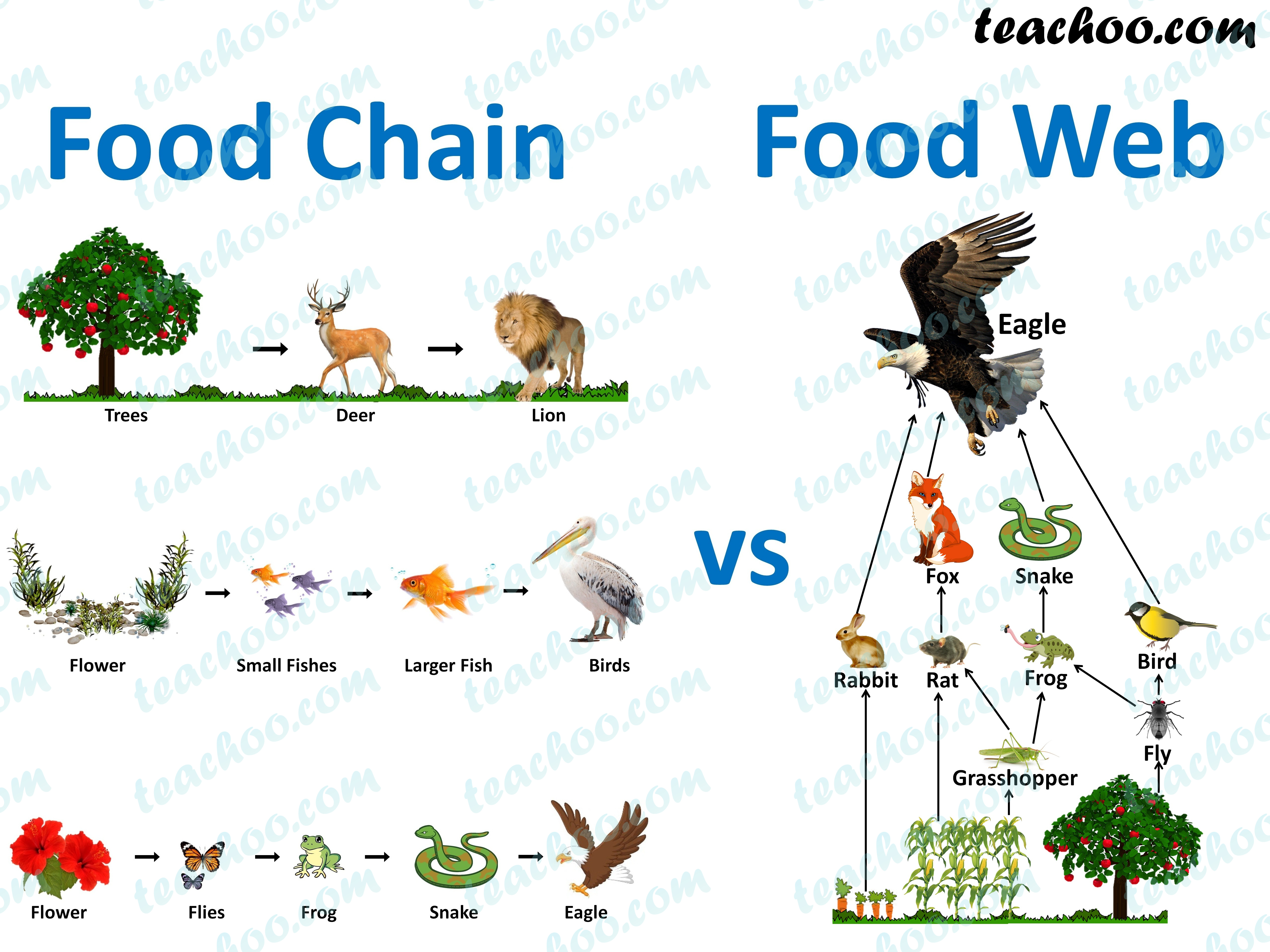 What Is The Difference Between Food Chain And Food Web