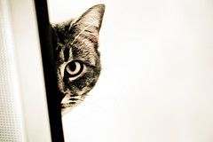 Hiding Cat by Aftab Uzzaman