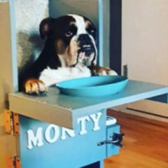 Dog High Chair West Elm Dining A Saved This S Life And It Still Does Every Day Source Instagram Tinkervol