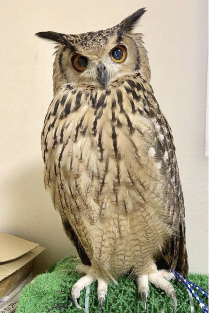 Do Owls Really Have Long Legs : really, Turns, Skinny, Under, Their, Feathers, Rainforest