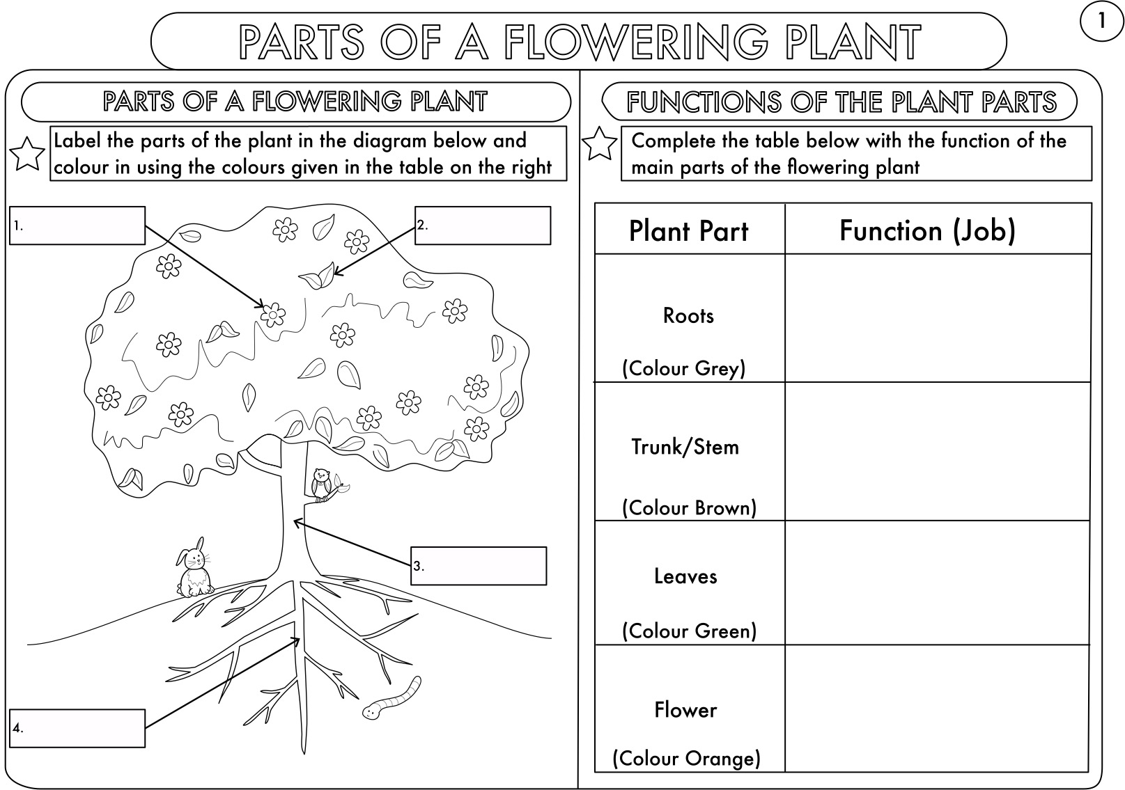 parts of a plant diagram worksheet wiring for kenwood car stereo year 3 and 4 science worksheets with complimentary posters