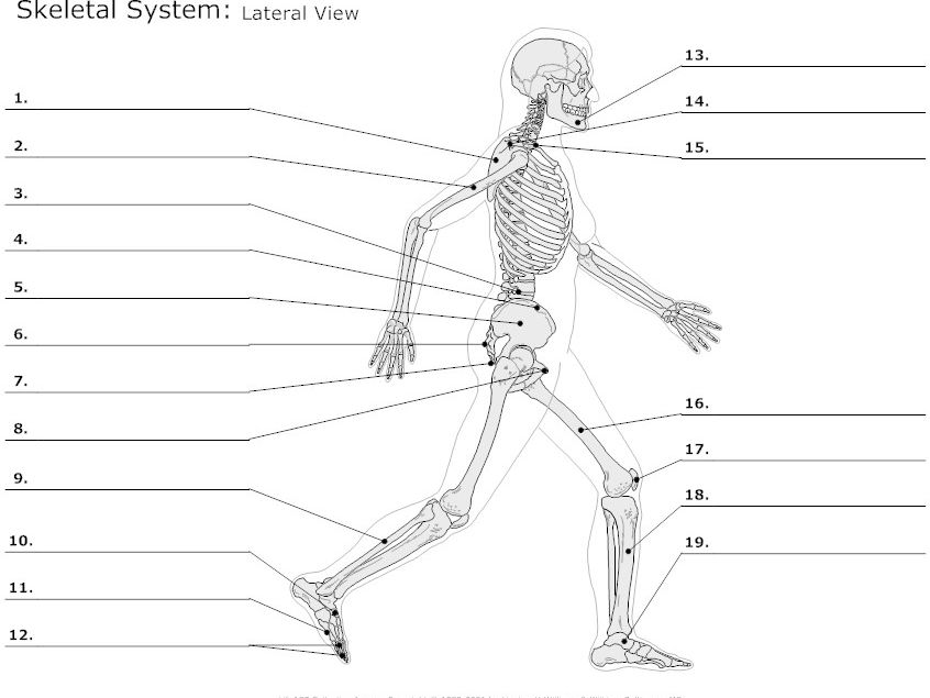 label the following diagram of respiratory system cat6 b wiring as level pe 2016(new spec) - topic 1 muscular skeletal by dzeki teaching resources tes