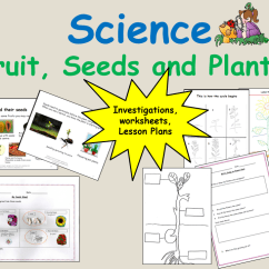 Sunflower Plant Life Cycle Diagram Pi Controller Block Plants That Flower And Of A Bean Reception Keystage 1 Science By Ro Milli0110 Teaching Resources Tes