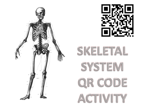 Body Systems: Skeletal System QR code Activity by
