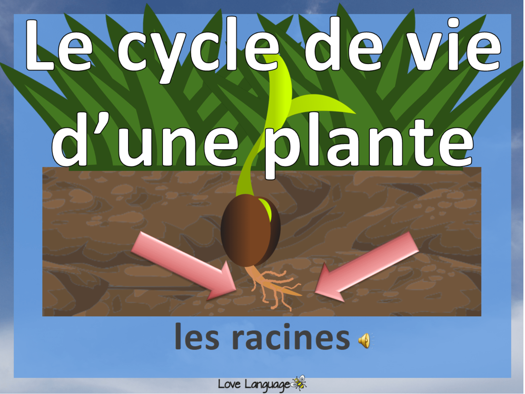 Life Cycle Of A Plant In French Bundle By Lisadominique