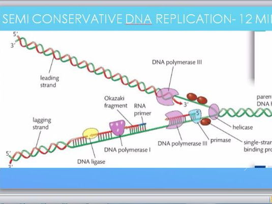 dna replication diagram worksheet 98 civic headlight wiring and the semi-conservative model by tom_howard12 - teaching resources tes