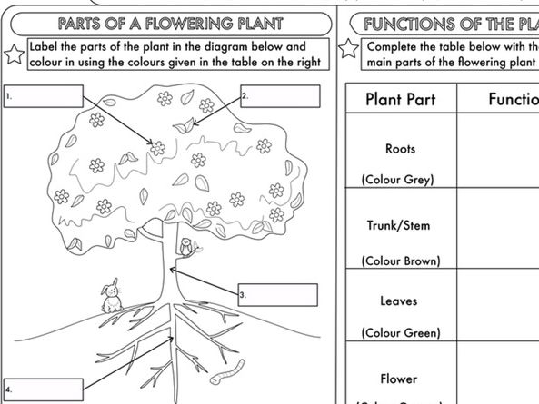 flower parts diagram without labels rel speakon wiring year 3 science: plants topic worksheets by beckystoke - teaching resources tes