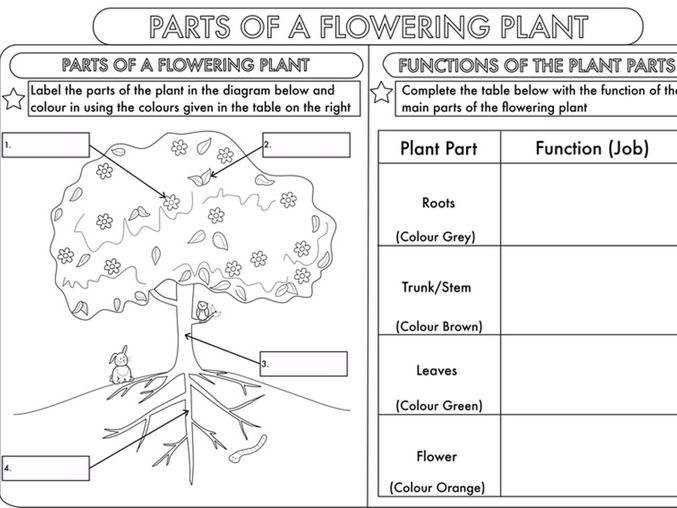 Fill Blank Parts Flower