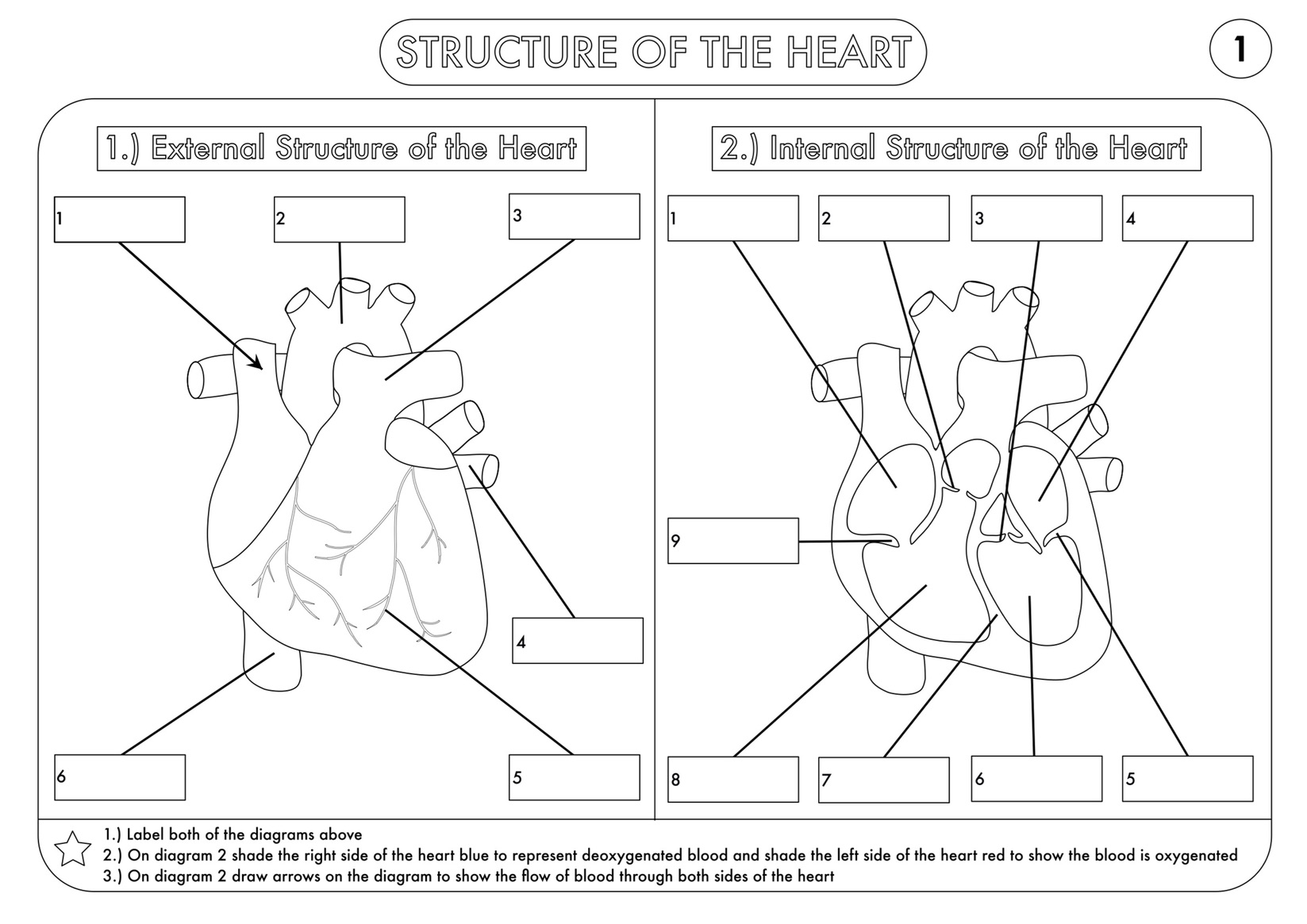 Labelled Diagram Of The Heart Tes