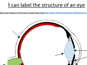 Label the eye by RachelWelch  Teaching Resources  Tes