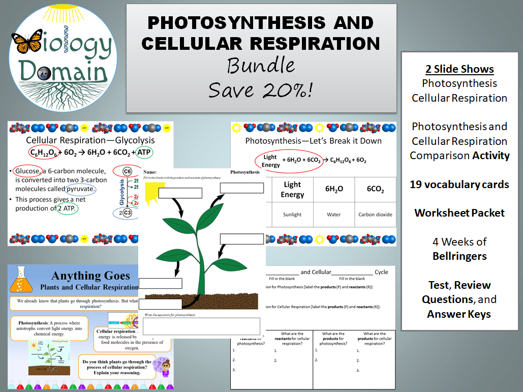 Photosynthesis And Cellular Respiration Bundle
