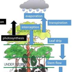 Tropical Rainforest Diagram Whole House Generator Wiring A Level; Case Study Of - Impacts Management On Water And Carbon Cycles By ...