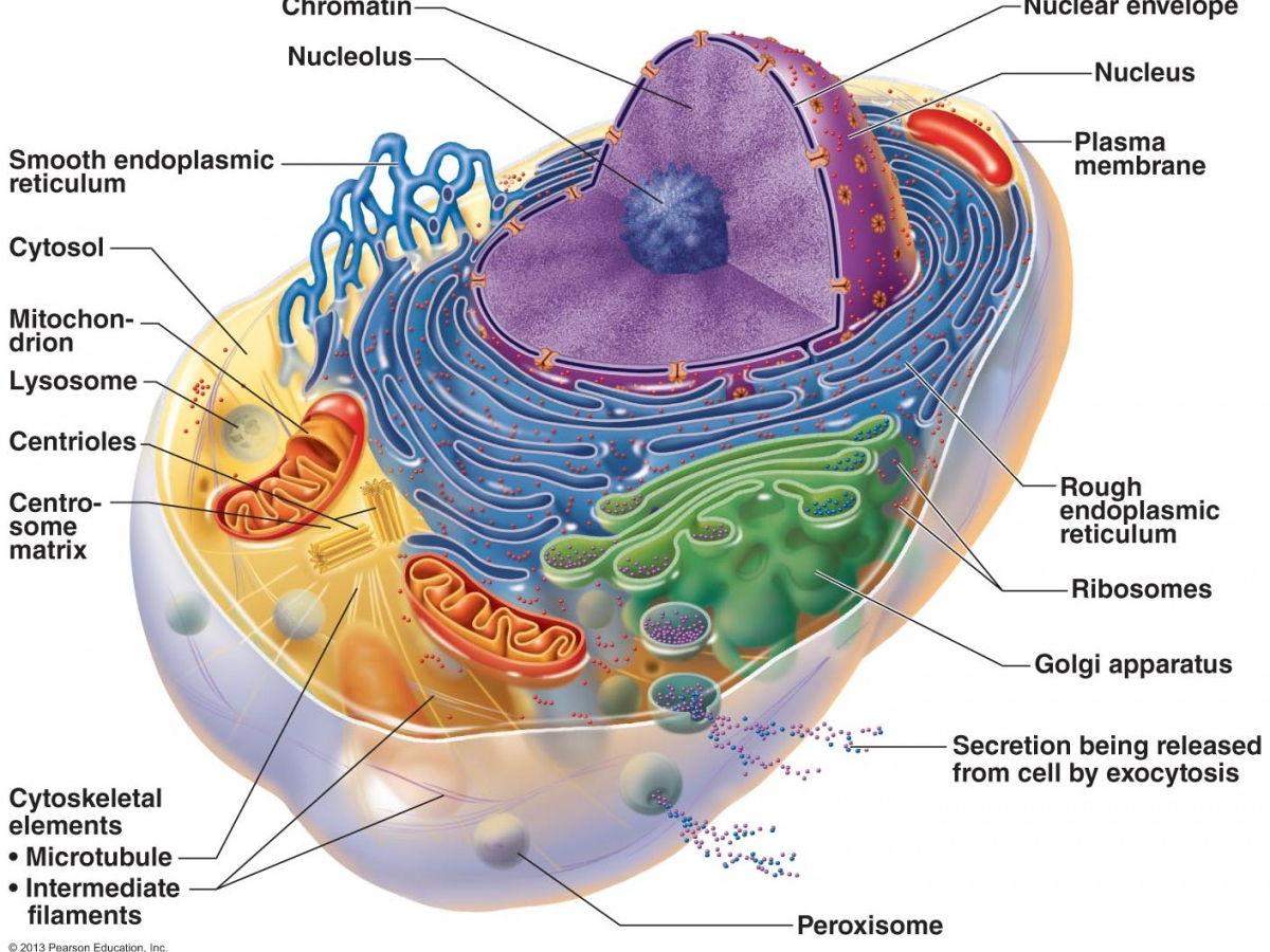 Biology As And A2 Syllabus Revision Notes By Mollybuckwald