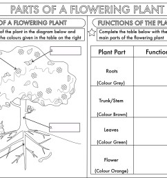 year 3 science parts of a plant worksheet by beckystoke teaching rh tes com printable blank flower diagram label parts of a flower [ 1615 x 1135 Pixel ]