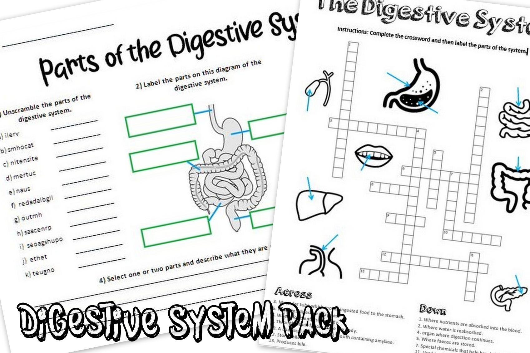 Digestive System Worksheet Pack