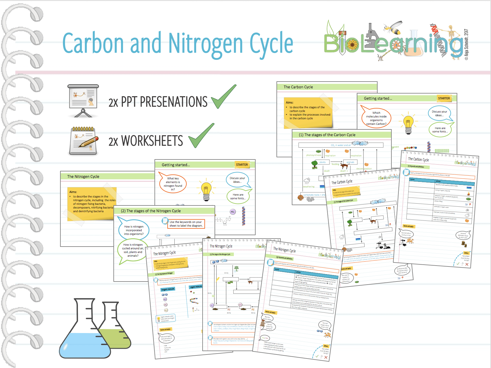Carbon And Nitrogen Cycle Worksheet