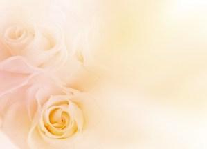 薔薇 バラ ばら 淡い ベージュ イエロー 花 フラワー 背景 パステル バックグラウンド 壁紙 テクスチャ エステ きれい 美しい ウェディング ブーケ ブライダル 結婚 結婚式 飾り 花飾り 花模様 装飾 デコレーション 美容 母の日 ホワイトデー バレンタインデー バレンタイン 招待状 ウェルカムボード 誕生日 誕生日カード ポストカード お祝い 記念日 メッセージカード メッセージ ギフト ギフトカード 模様 女性 女性的