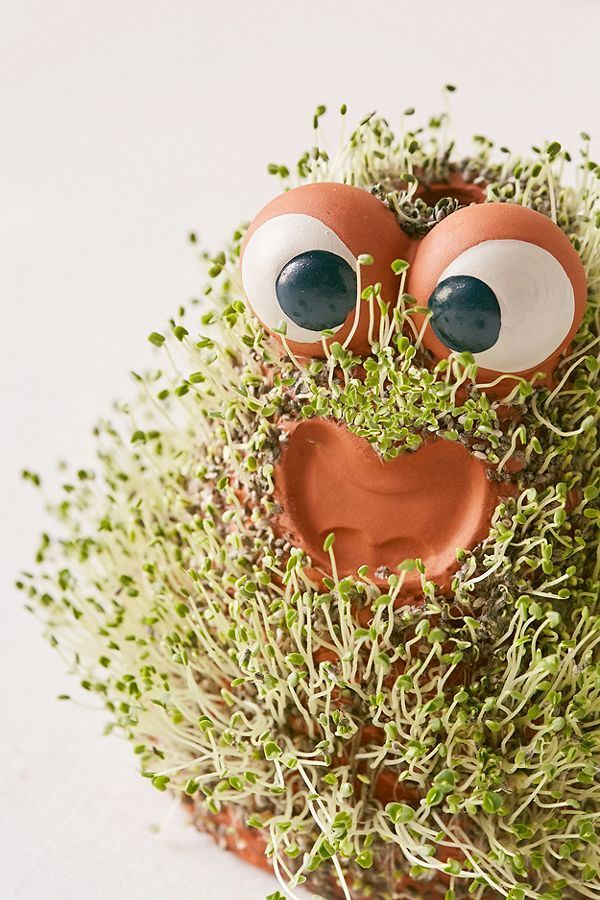 Chia Pet Images : images, Friend, Giftibly