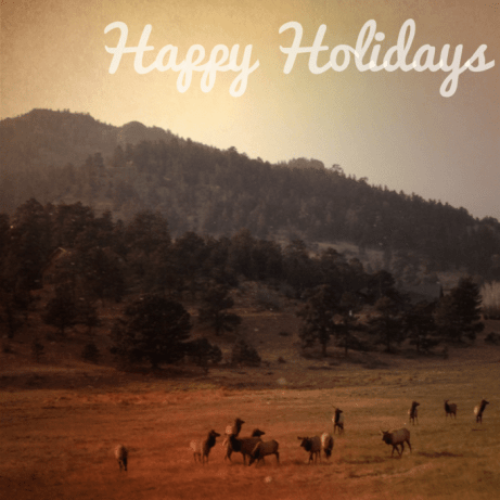 Elk in Estes Park on our Christmas Drive