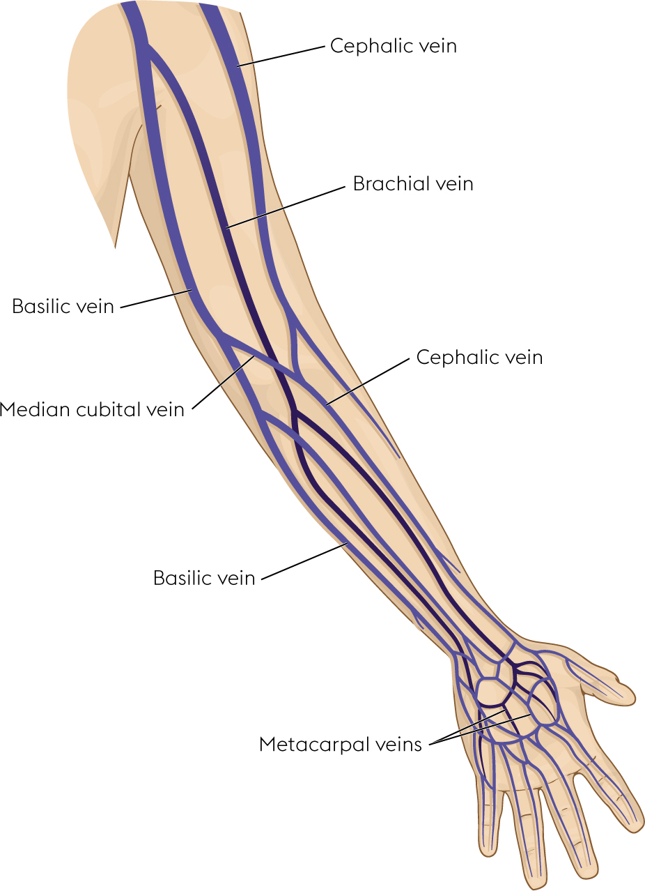 hight resolution of veins of the arm