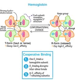 biochemistry glossary hemoglobin myoglobin 3 hemoglobin draw it to know it [ 1667 x 1667 Pixel ]