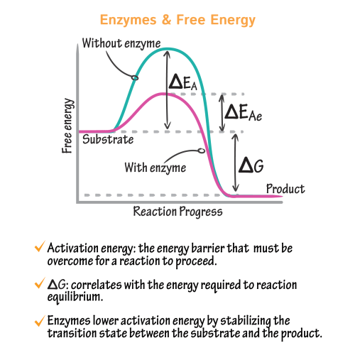 small resolution of energy diagram