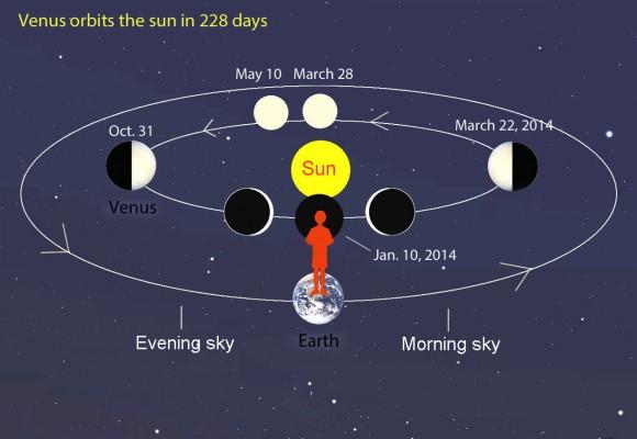 """Como Venus gira alrededor del Sol, lo vemos desde el punto de vista que cambia constantemente, desde nuestro punto de vista en la Tierra.  En mayo, el planeta es ligeramente a la izquierda o al este del sol y hacer su reaparición como casi """"Luna Llena"""" en el crepúsculo de la tarde.  Venga de Halloween que aparecerá como una media luna.  Crédito: Bob King"""