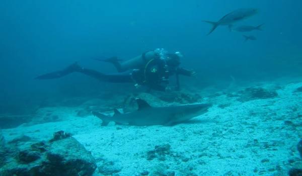 Scuba_diving_the_galapagos_islands